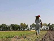 Nine Kissan platforms set up in district to facilitate consumers