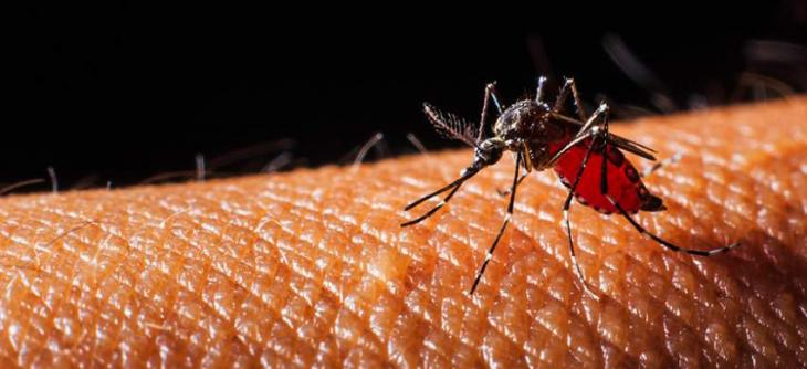 Commissioner directs to combat dengue on emergency basis