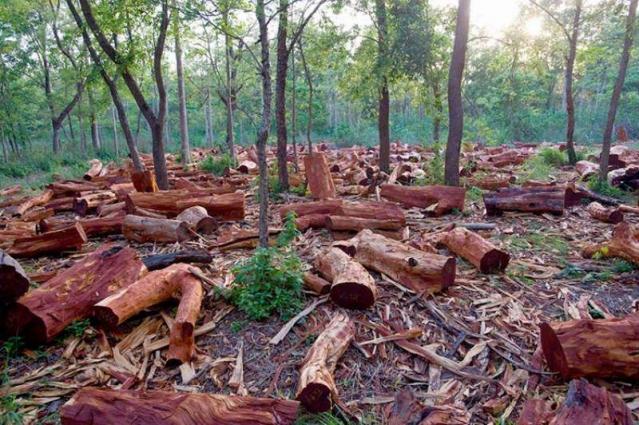 Deputy Commissioner Karak bans deforestation