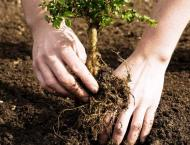 114.349 mln saplings ready for plantation in spring season in KP: ..