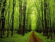 UNFCC issues report on technical assessment of Pakistan Forest Re ..