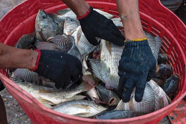 DG Fisheries visits Tilapia Research Centre Project