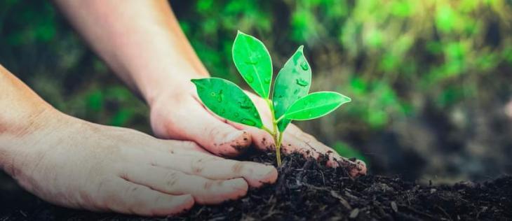 PHA to plant 45 Miyawaki forest in city