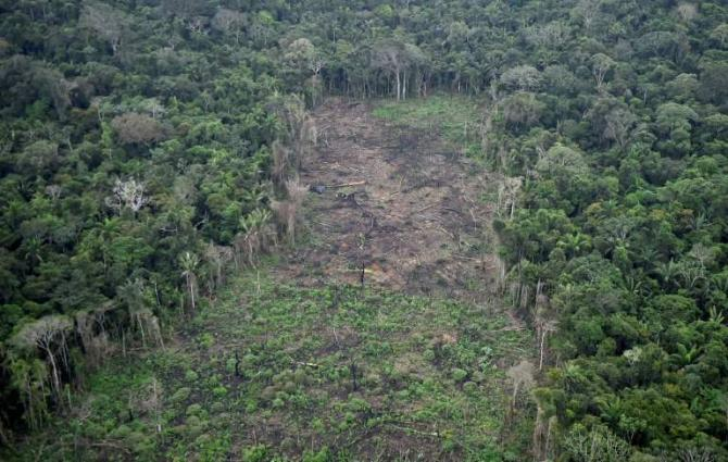 Covid an excuse to strip tropical forests: indigenous groups