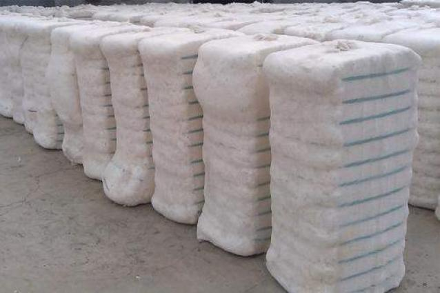 Over 5.6m cotton bales reach ginneries across Pakistan