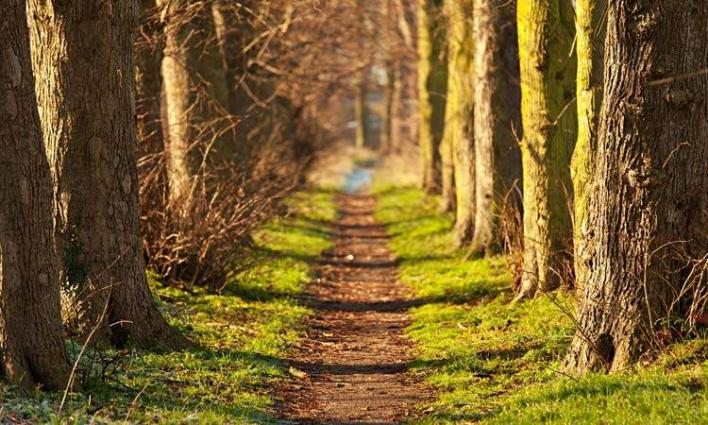 Spending time in nature may help ease stressful feelings