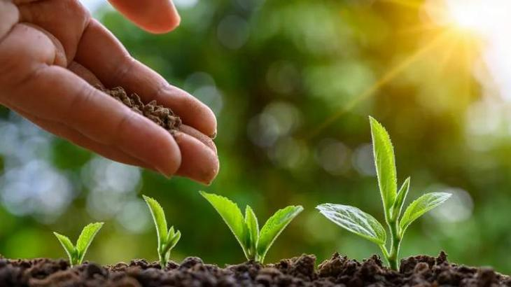 Tree plantation campaign launched at ICT public schools