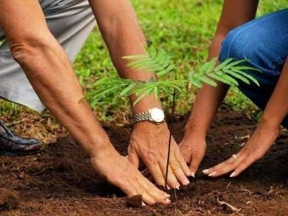 Commissioner urges teachers, scouts to play role in plantation drive