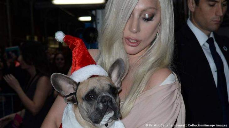 Lady Gaga's stolen unharmed dogs return to police