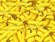 Bananas remain top Lao agricultural export