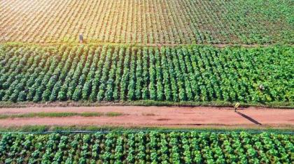 Chines Agriculture Commissioner reaffirmed commitment to revitalize Pak agri sector