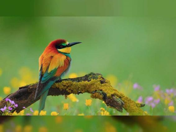 """المكتب شبه الإقليمي للصحة الحيوانية ينظم ندوة حول """"أمراض الطيور"""""""