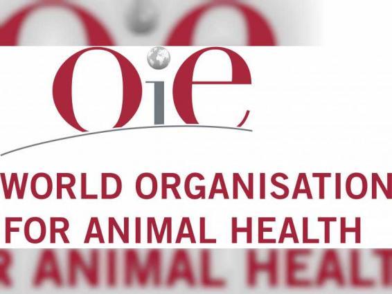 """المكتب شبه الإقليمي للمنظمة العالمية للصحة الحيوانية بأبوظبي يعقد اجتماعا مع """"شؤون البلديات"""" في البحرين"""