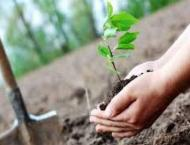 14,000 saplings planted on various roads, parks in tree plantatio ..