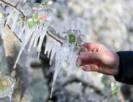 Italy's sparkling apple trees are frozen to survive