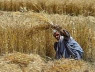 Inter-cropping can reduce cost, increase profit: Secretary agricu ..