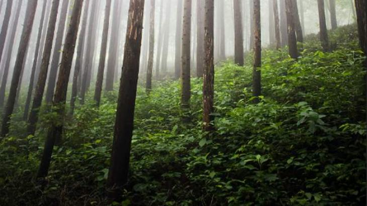 Forests Deptt plants saplings at 5000 kanals private land
