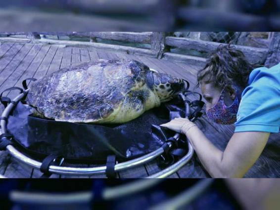 EAD, National Aquarium team up to rescue endangered loggerhead turtle