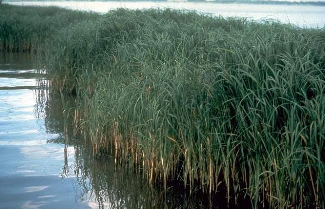 Halophytes can help in reducing transpirational water loss:  Dr Sergey