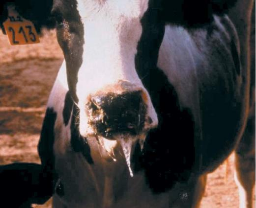 Meeting held to discuses outbreak of FMD disease in animals