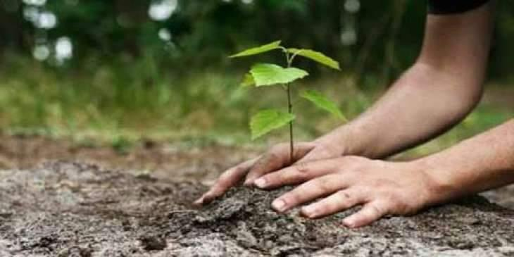S. Mongolian province launches tree-planting campaign to combat desertification