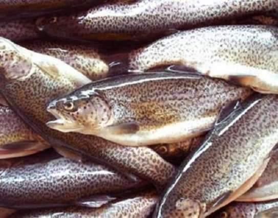 Govt provides Rs112.56 mln for development of  trout fish farming