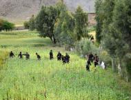 Poppy crop destroyed in Mohmand district