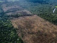 Supermarkets threaten Brazil boycott over deforestation