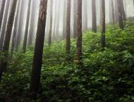 KP Forest Deptt proposes new projects for budget 2021-22