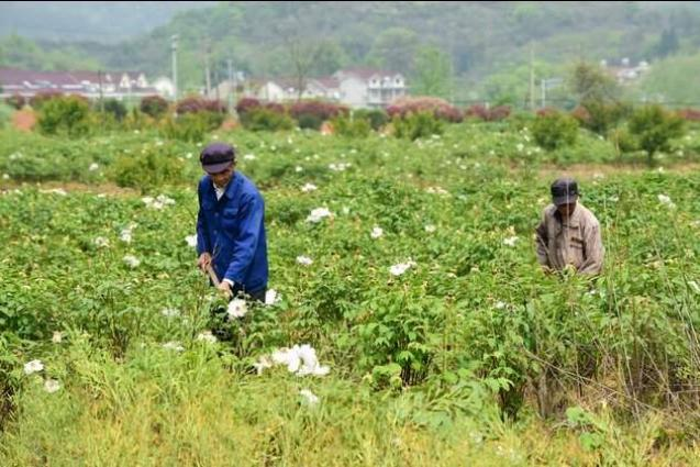 China sees rise in urban, rural subsistence allowances in Q1