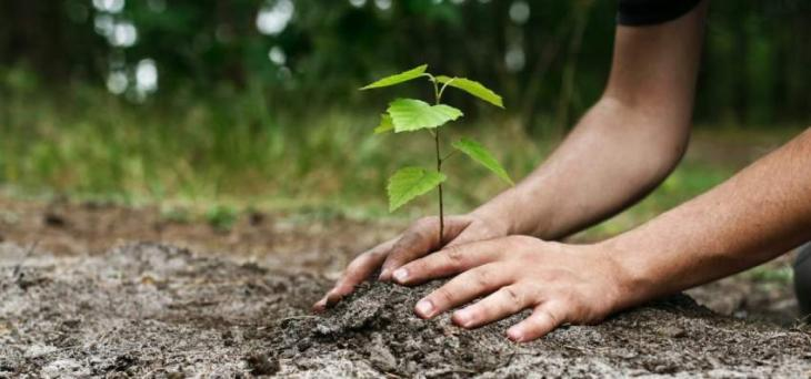 Tree planting, landscaping and lighting work are all done as part of a clean, environmentally friendly initiative: DG