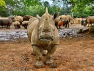 Japan zoo prays for rhino love as new resident settles in