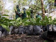 Ghana to plant about 5 mln trees to combat deforestation