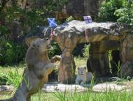 Roaring success at Euros for 'psychic' Thai lion