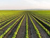 Prizes awarded to farmers for producing more crop