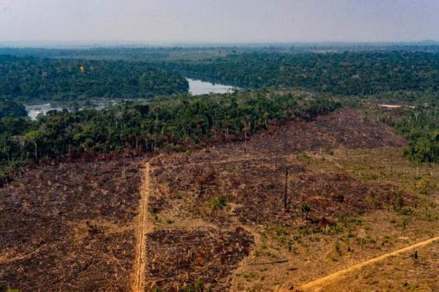 Brazilian Amazon deforestation hits record for May