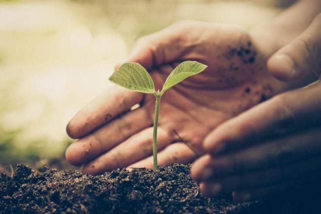 PHA distributes free saplings on world environment day