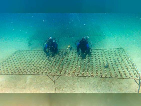 Hamdan bin Zayed launches largest Coral Reef Rehabilitation Project in Region