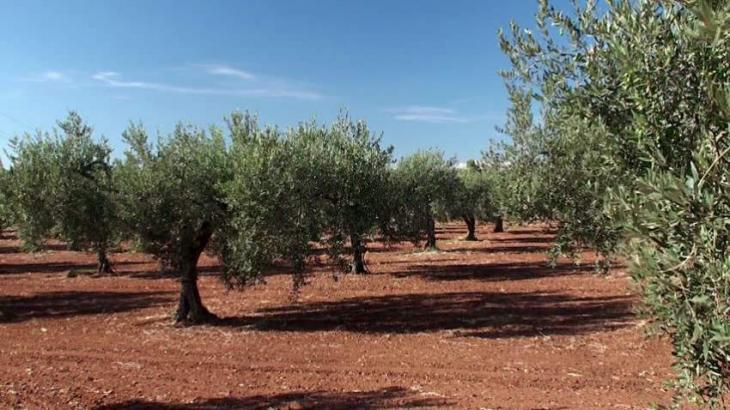 FWRDP provides free seeds, olive samplings to farmers