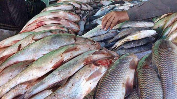 Fish export increased during first nine month of current FY, says economic survey