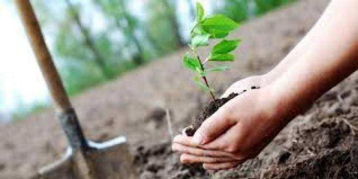DC inaugurates tree plantation campaign