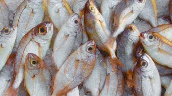 Australian DNA age test for fish to revolutionize population management
