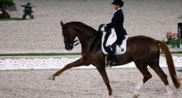 Olympic dressage greats say horses worth weight in gold