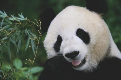 China makes notable progress on biodiversity conservation