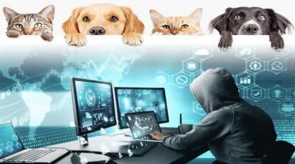 شرطة أبوظبي تحذر من إعلانات إلكترونية وهمية لبيع الحيوانات الأليفة