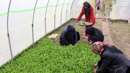 Afghan gov't to build 1,000 greenhouses