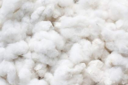 Cotton crop cultivated over 1.88 million hectares