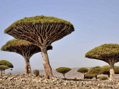 UAE's US$110 mn development, relief aid enabled Socotra to overcome challenges, dire conditions