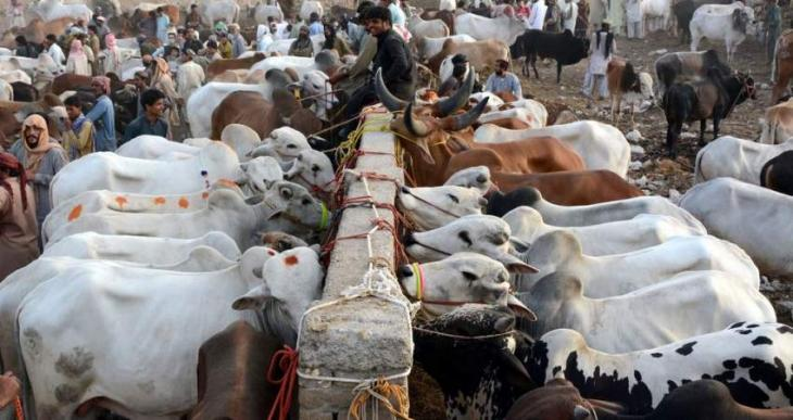 Dist govt launches Eid cleanliness operation for lifting sacrificial animal waste