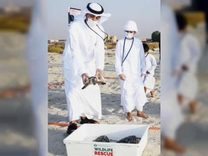 Turtles rescued by Environment Agency and Nawah released back into natural habitats
